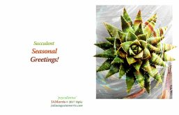 Succulent Seasonal 2017